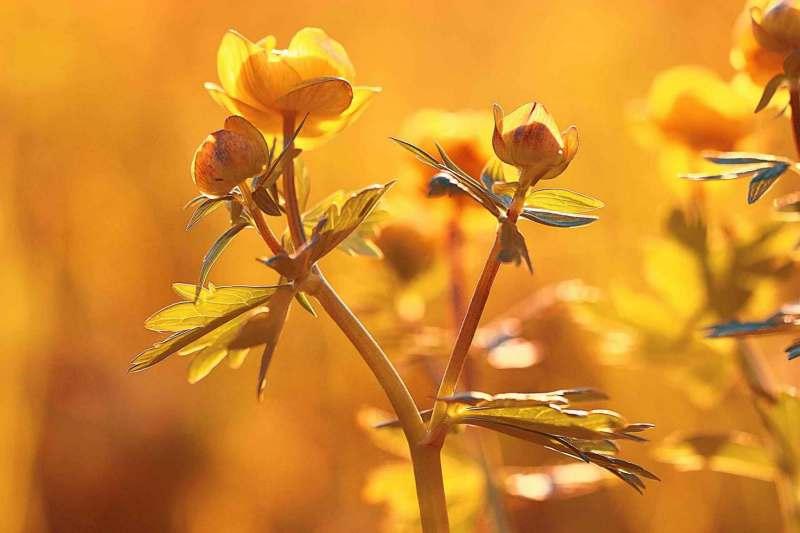 wilde Frühlingsblumen