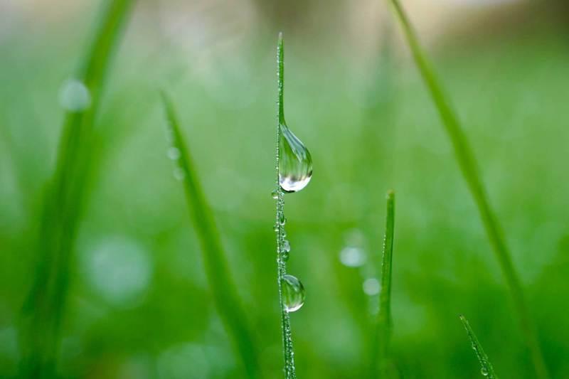 Wassertropfen auf regennassen Halmen