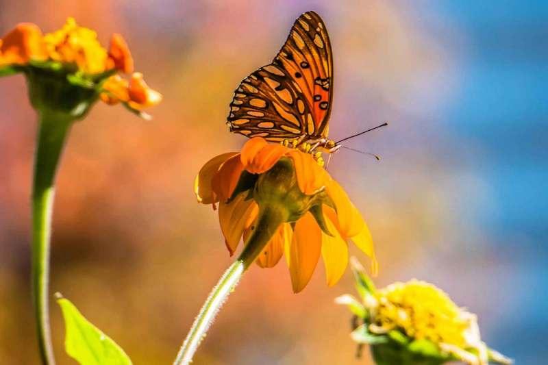 Herbstsaison : Blumen und Schmetterling