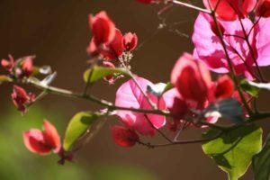 Rote Blüten im Frühjahr
