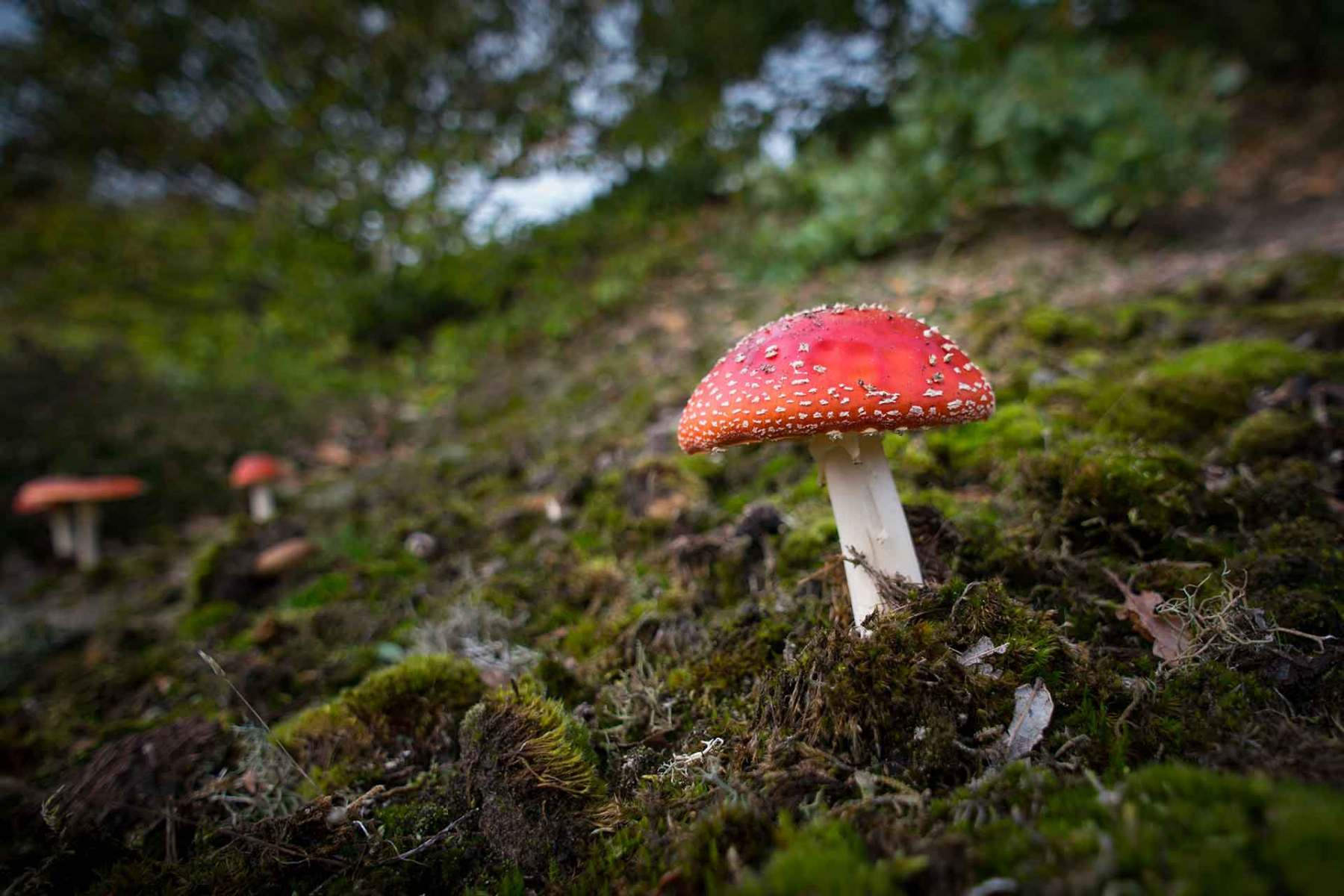 Pilz im Herbst im Wald